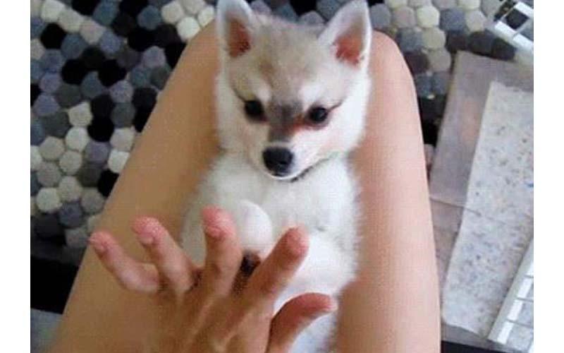 《體味最輕狗狗前五名》沒想到第一名竟然是牠?怎可以又可愛又香啦!