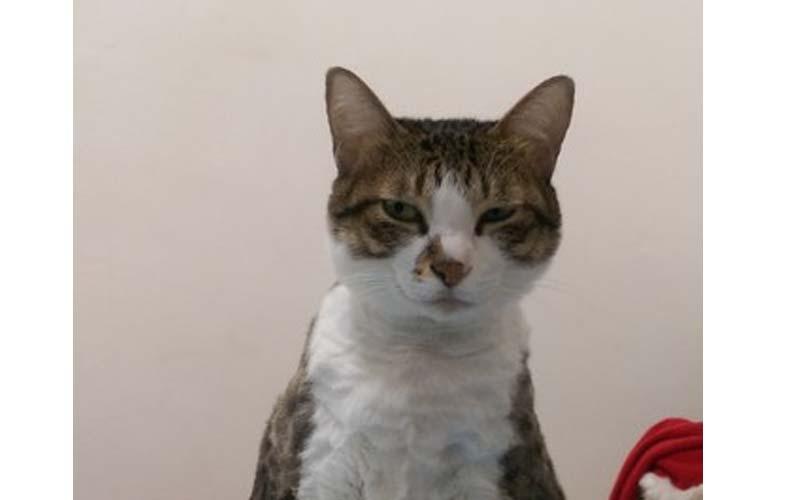 每次只要出門上課貓貓就會露出這種表情,於是主人決定帶牠一起上學,結果...