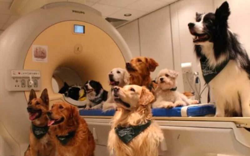 動物新研究指出「原來狗狗真的可以了解主人在說什麼?!」