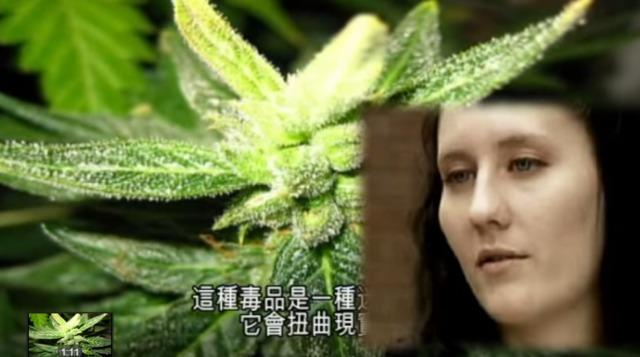 你以為吸少量大麻就不會上癮?它其實比一級毒品更邪惡!對身體的危害超乎你想像的恐怖!