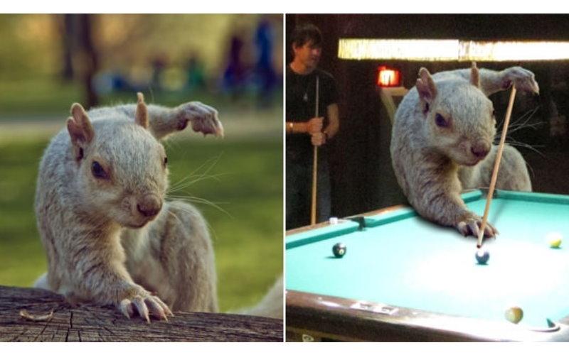 姿勢超猛的松鼠被人拍下這張照片後立馬爆紅!再度引來PS大神「腦洞大開」惡搞!