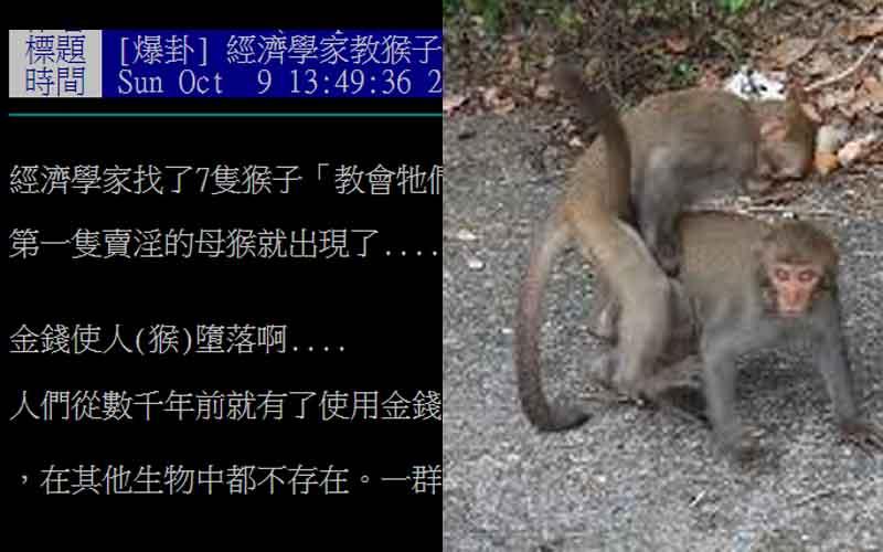 經濟學家教會猴子金錢如何使用後,竟有母猴開始學會賣淫?!