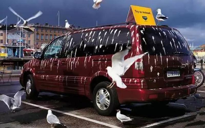你有中招嗎?為何我的車總是「鳥屎特別多」?!專家表示跟「車子顏色」大有關係!
