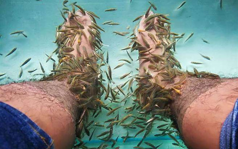 男子做足浴「魚全死光」,低頭向老闆坦承「10年來沒洗過幾次腳」!