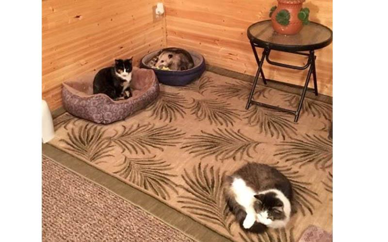 奶奶一直以為她養了三隻貓咪,孫子一看不對勁,這其中一隻不是貓啊!