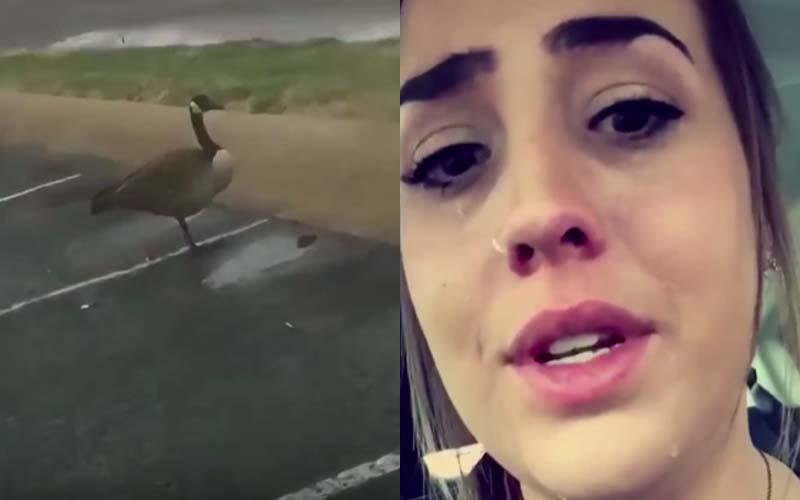 在停車場看到一隻大鵝「只有一隻腳」她傷心的哭了1小時,直到看見「真相」....傻眼貓咪!