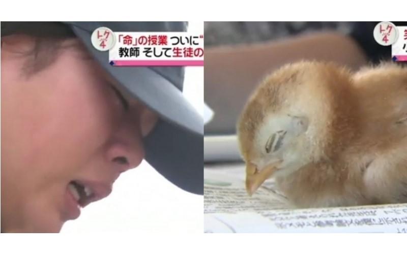 日本學生超震撼生命教育...將親自養育的小雞炸成雞塊:學生全邊哭邊吃…(影)