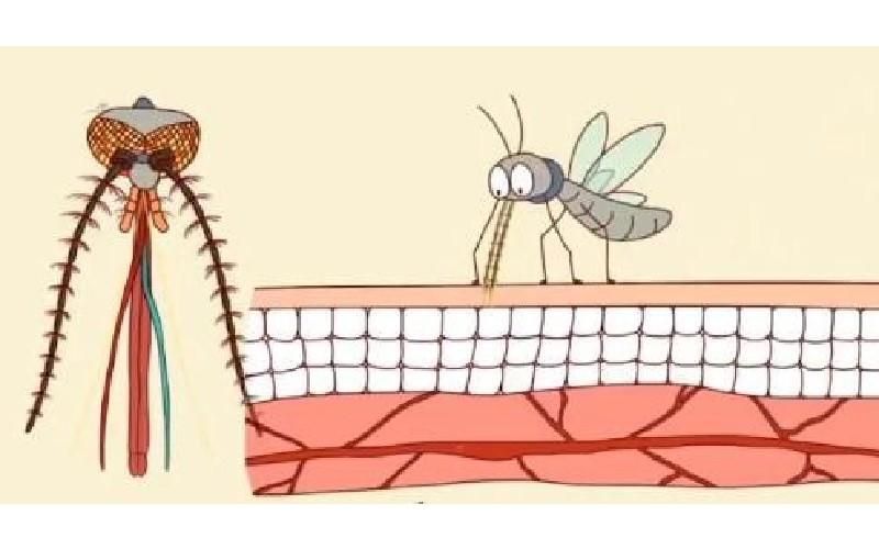 「蚊子不看血型只聞味道」 告訴你蚊子為什麼「總是只叮你」的原因!不想被叮就趕快改掉