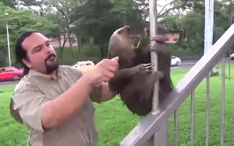 不准碰林北!樹懶不想被救緊抱欄杆「崩潰仰天尖叫」:就說我沒事啊~
