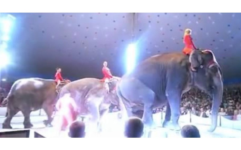 馬戲團「大象表演」卻失足從高處摔落 同伴秒上前關心...網友怒:請抵制馬戲團!
