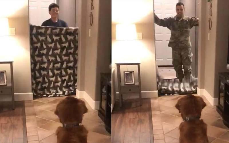 主人跟阿金玩毯子消失遊戲,毯子拉下來的瞬間是九個月沒見的軍人爸爸,狗狗激動得大哭!