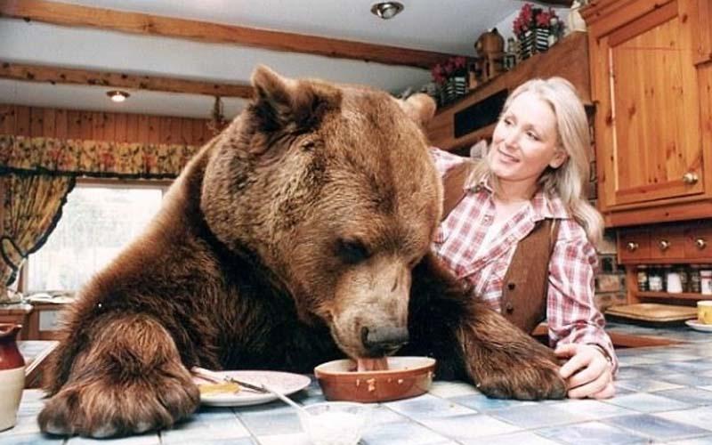 一對夫妻因為無法生育,於是養了一頭比人類還巨大的熊,把他當兒子照顧!結果..