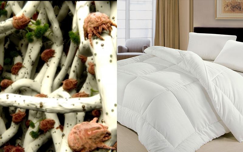 太恐怖了!你每天可能都睡在15億隻「塵蟎」上卻不知道!原來被子枕頭要「這樣」才能確實除蟎!!
