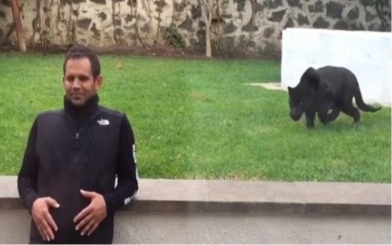 他在沒玻璃隔著的園區內背對著黑豹,結果一轉身…黑豹撲上去後大家都愣住了!