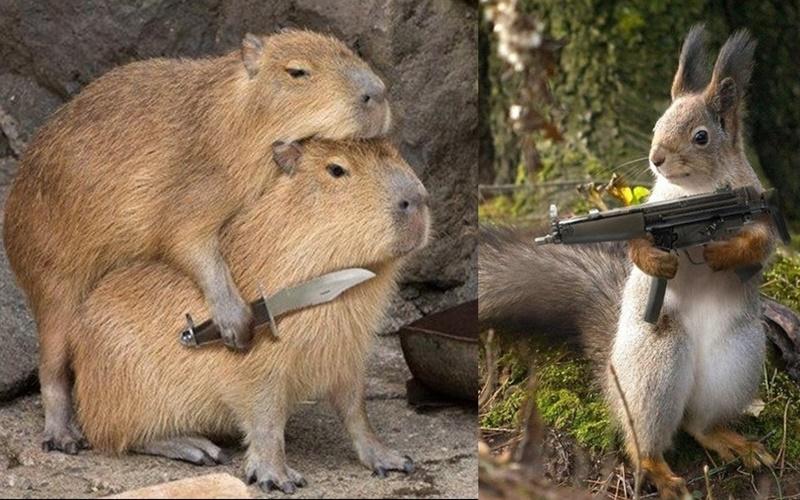如果動物們都有武器的話會變成什麼樣子?企鵝那張笑死我了!!