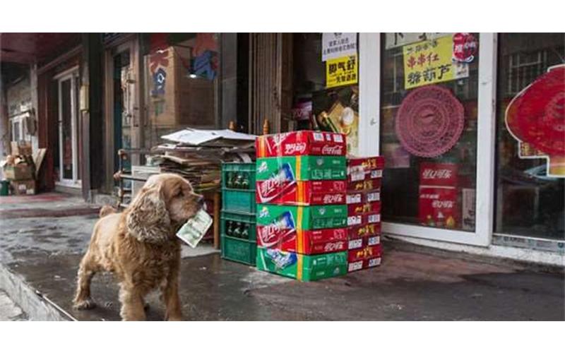 狗狗每天和主人討到零用錢就會往商店衝,可愛程度讓人笑的顴骨爆炸