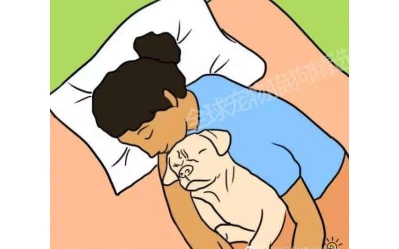 究竟人類和狗狗一起睡覺會不會影響身體呢?7個理由告訴你,就是該和牠們一起睡!!
