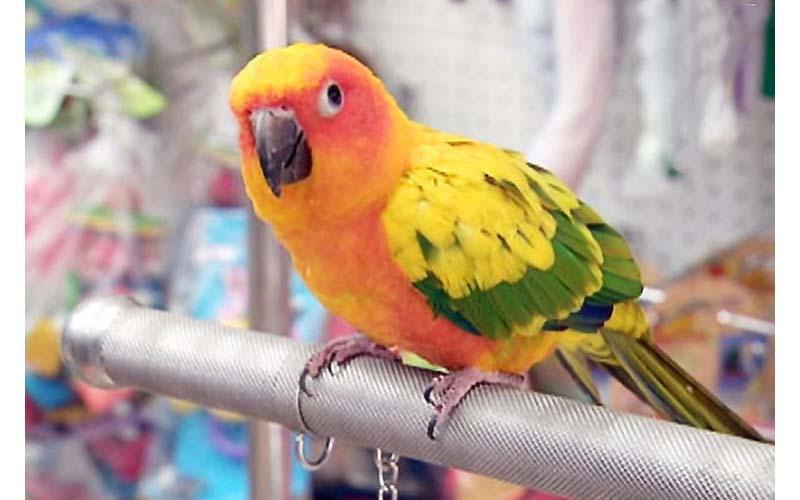 人類們最容易忽略的「5大養鳥觀念」!請飼主或欲飼養者好好觀看!