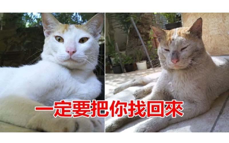 貓妹妹走失後,貓哥哥也跟著不見了...沒想到八個月後貓哥哥竟然帶著妹妹回家了!
