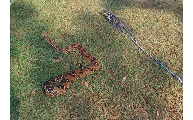網友在台中公園溜寵物蛇遭驅趕,他大怒「為何其它毛小孩寵物可以,爬蟲類寵物就不行?」