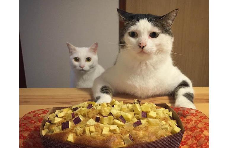 萌炸了!貓奴記錄下兩隻貓咪成天看人吃飯的反應表情,差點笑歪了!