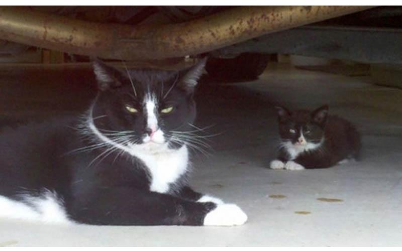這些貓咪父子檔再次證明「小孩真的不能偷生!」簡直COPY款嘛~