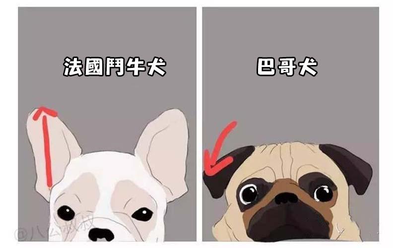 教你清楚分辨汪星人的《品種大全》,詳讀過後包準你不會再把這些狗狗搞混啦!