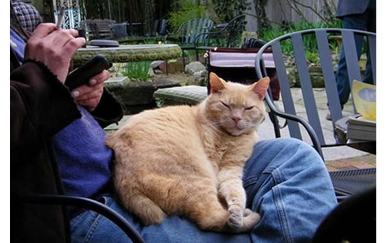 你知道貓咪為何喜歡坐在人類大腿上嗎?這些原因太溫暖太可愛了!