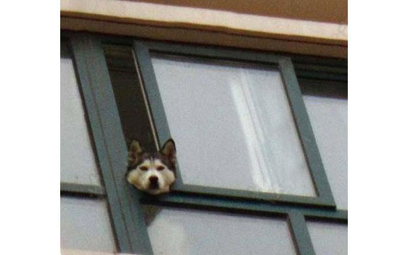 原以為月月從窗戶探頭是太想我,結果一回到家崩潰了!!這啥世界大戰?!