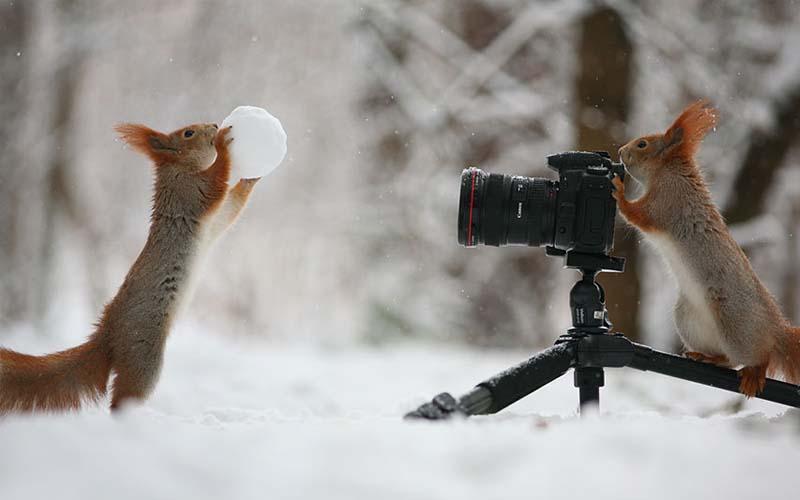 萌萌松鼠玩雪杖還兼差攝影師的畫面,真的太可愛了!!