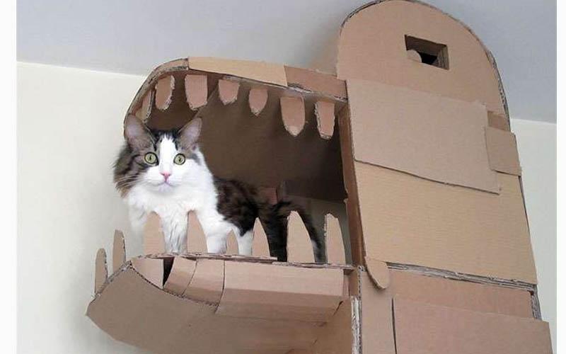 貓奴為了家中主子自己動手做了「超豪華五星級紙箱城堡」認真覺得主人真的太強了!!!