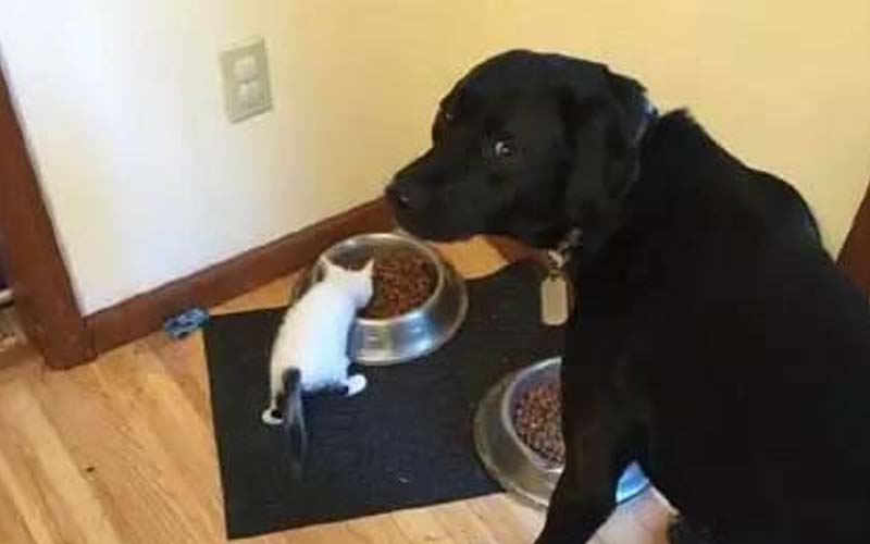 主人剛收養一隻小貓,可大汪卻滿臉委屈加無奈,「主人!你就不能管好這小傢伙嗎?」