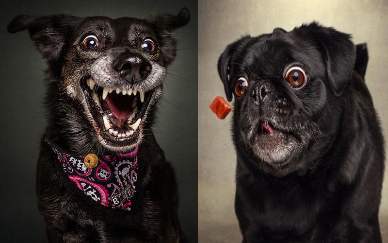 攝影師精準拍下「狗狗接食物」的瞬間,超爆笑貪吃表情讓所有人笑翻:到底多想吃?