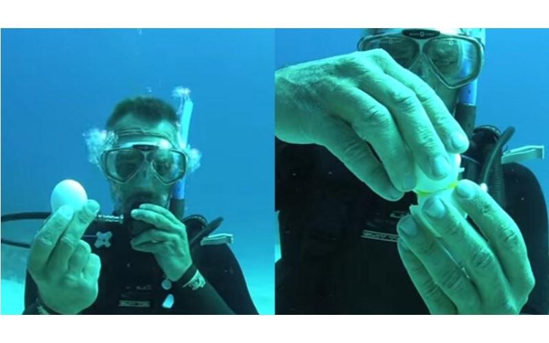 他在20公尺深的海底敲開「雞蛋」,下一秒超驚奇畫面讓人目瞪口呆阿!(圖+影)
