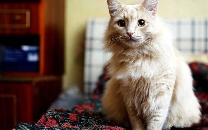 原來貓咪在床上尿尿是有原因的!這篇貓奴必讀啊!