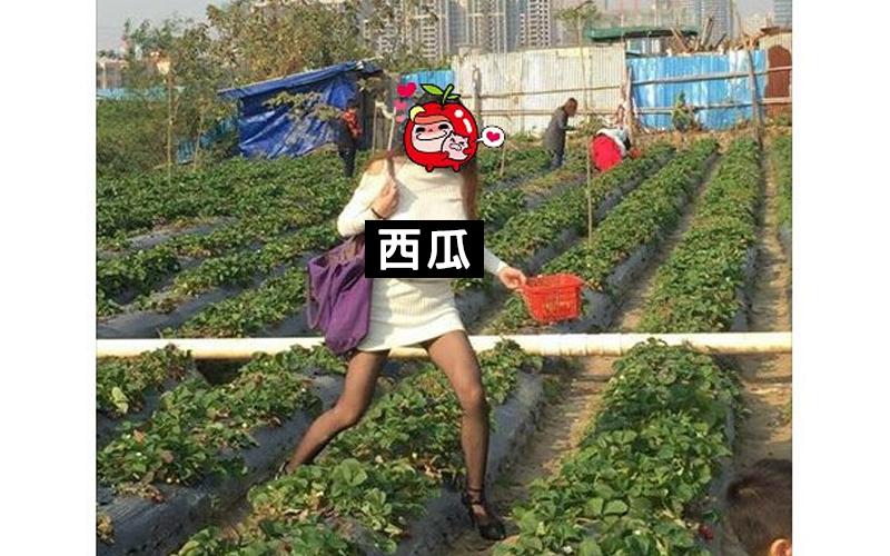 「低頭採草莓,舉頭望...」網友一抬頭被巨乳妹這幕驚呆!直呼太誇張:你確定不是西瓜園?