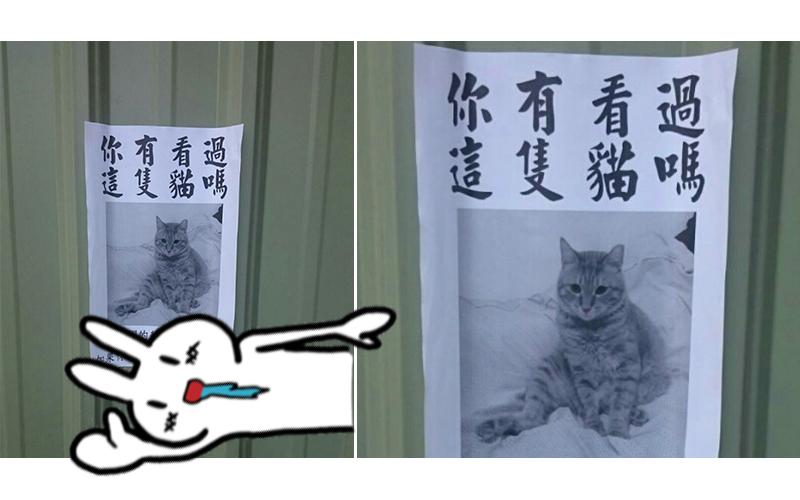 「你看過這隻貓嗎?」發現路邊公告,好心上前關心仔細一看「乾!拳頭都硬了...」
