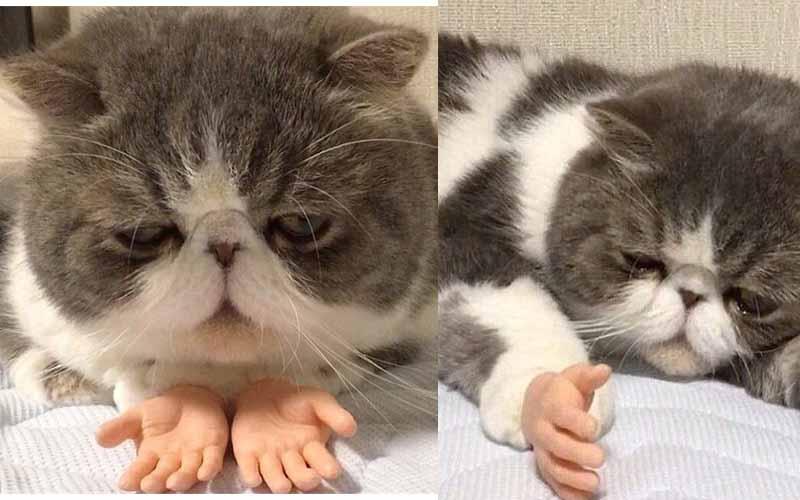 這隻看起來一臉厭世的貓主子,被鏟屎官裝上假手後照片瞬間爆紅瘋傳!太可愛了!