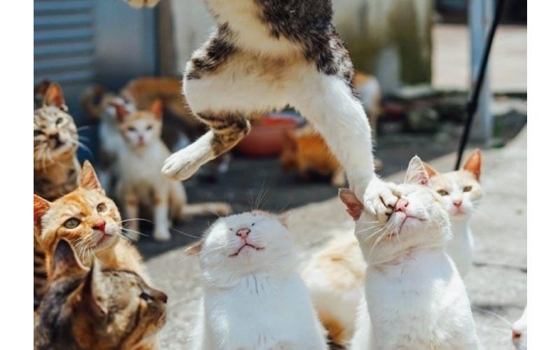一張「貓咪被踩臉照」竟衍伸出一個比一個還好笑的內心戲旁白呀!