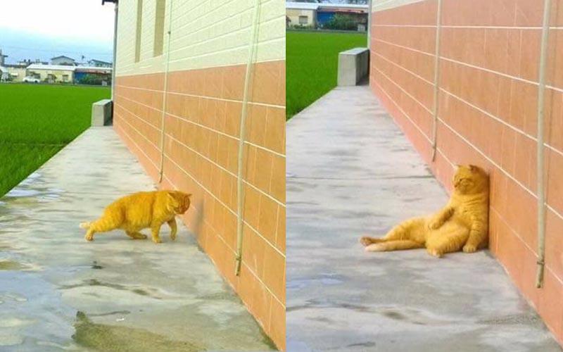 一隻胖橘貓默默走到田邊一副有心事的模樣,網友看後表示「好想跟牠喝一杯!」