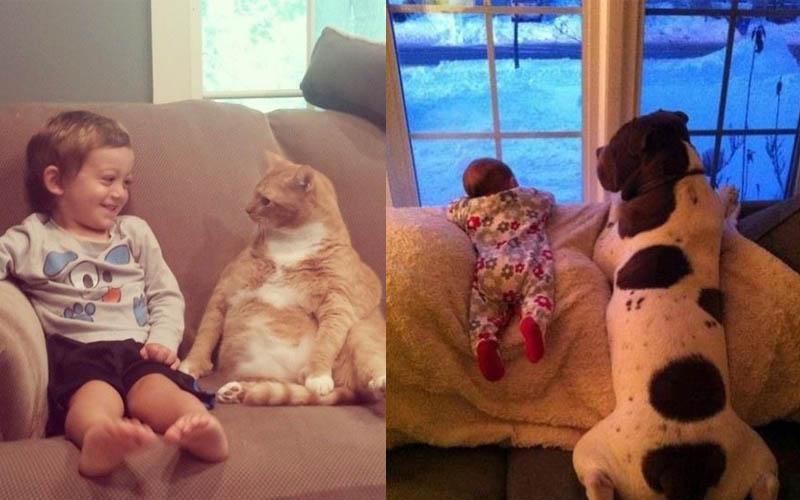 八張可愛到讓你覺得「好有愛」寵物跟小主人照片,這些畫面實在令人融化啊!!