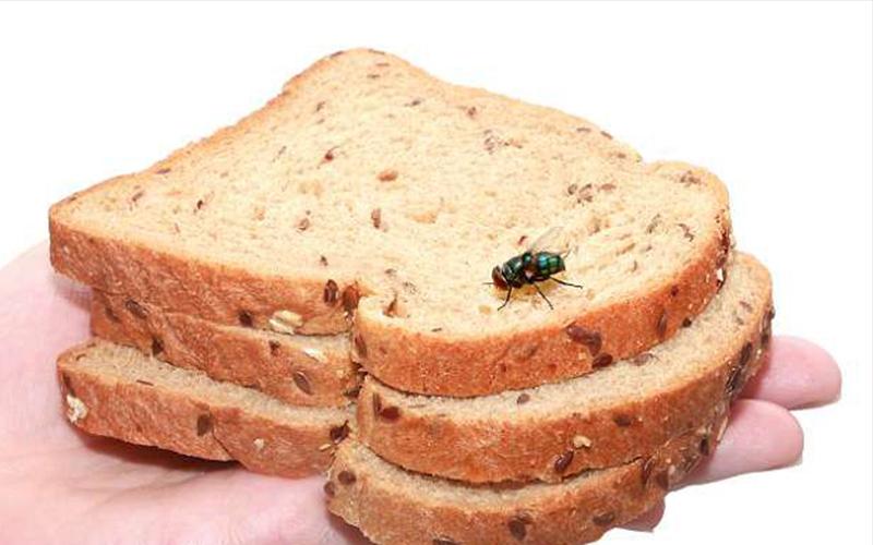 你以為「蒼蠅碰到的食物」趕走就沒事了能繼續吃?!讓你知道這噁爆的真相你絕對會不敢再碰!