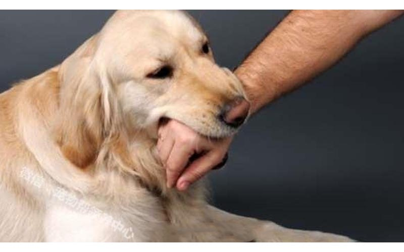 狗狗是不會隨便咬人!好好了解這「10個原因」你就不會再被狗咬了!
