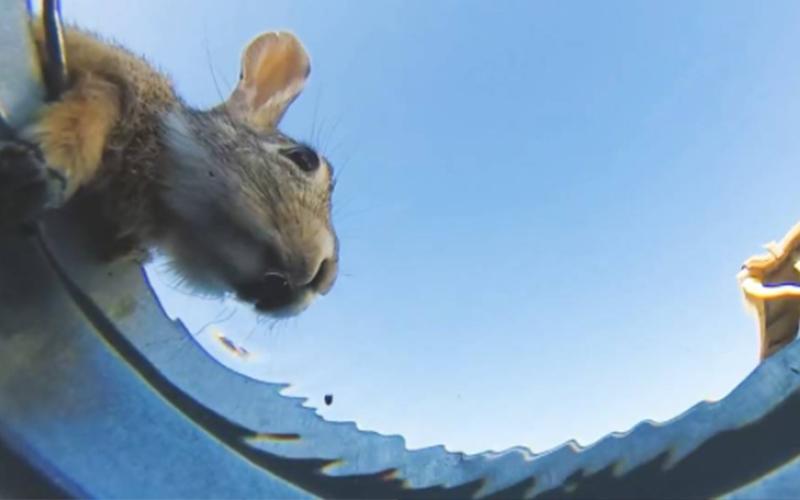 他把安裝了攝影機的水桶放到沙漠中「看看會有什麼動物來喝」,1:15的畫面讓大家秒萌化!(影)