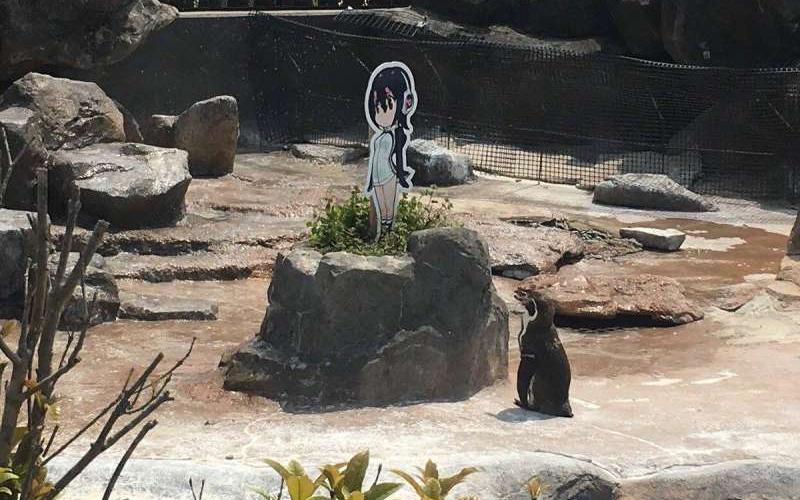 這隻企鵝大叔「戀上二次元萌妹」不吃不喝守在一旁,園方看不下去…小情侶慘被隔離