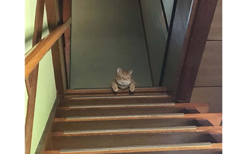 主人急著出門忘了給貓咪餵飼料,回家竟看到萌貓變成厭世臉XDD