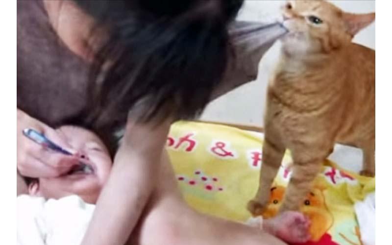 小主人被迫刷牙嚎哭,貓貓捨身相救「鏟屎的妳快住手啊!!」(影片)