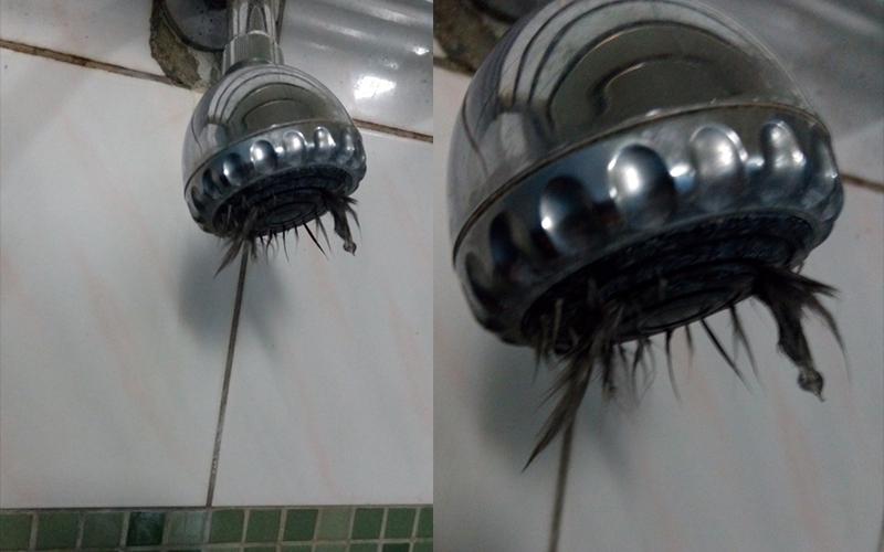 他洗澡開蓮蓬頭竟「炸出黑毛」!?崩潰「洗屍水」卻發現更噁心的事情還在後頭...
