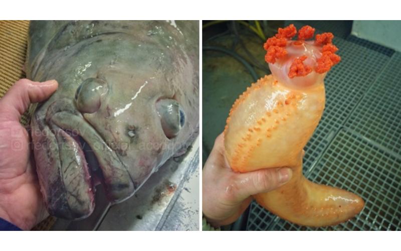 太獵奇!戰鬥民族漁夫分享「他捕獲的各種深海怪魚」,#1根本是異形吧!