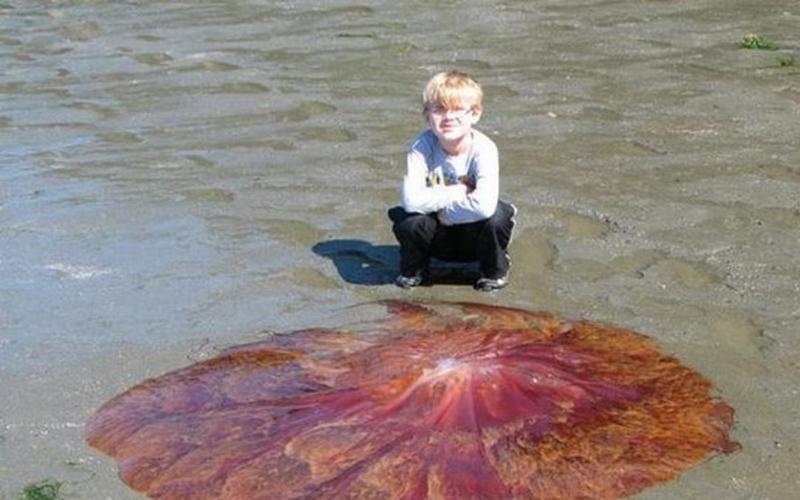 小男孩在沙灘上看到「紅色圓形物體」興奮想摸!爸爸靠近一看嚇壞...馬上阻攔!